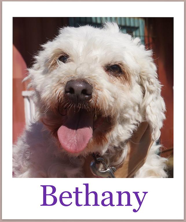 BethanyPro