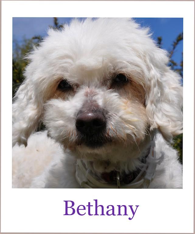 BethanyProneu3