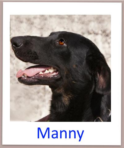 Manny prof n