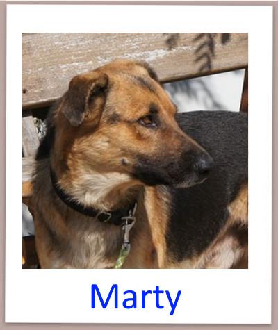 Marty prof n