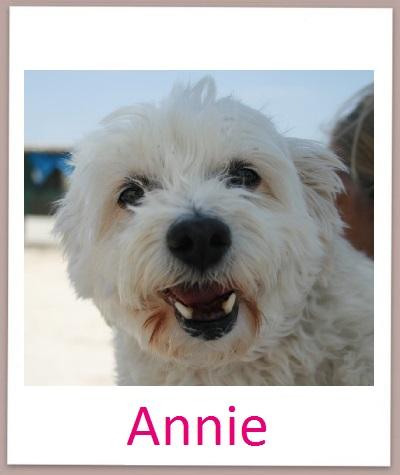 Annie prof
