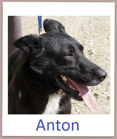 Anton prof