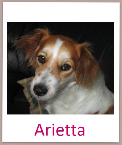 Arietta prof neu