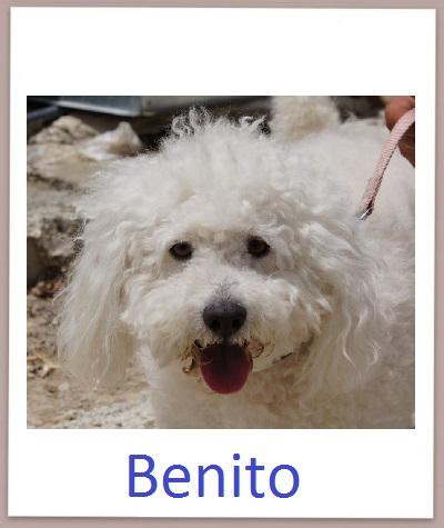 Benito prof