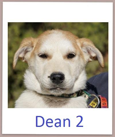 Dean2 prof