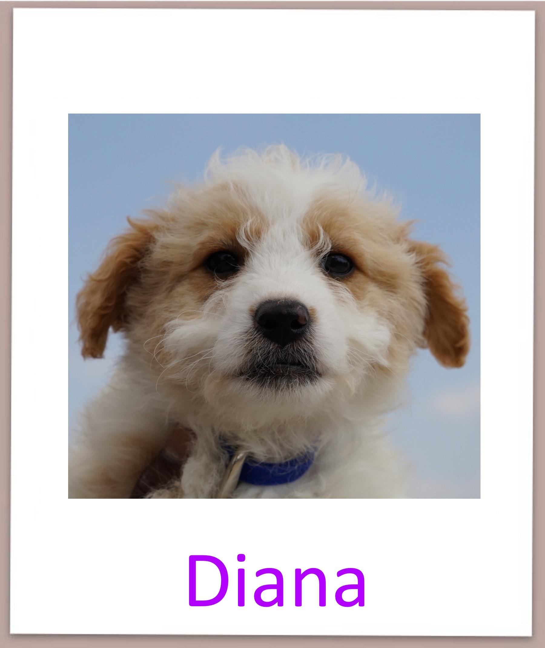 Diana prof