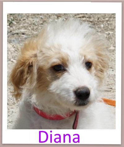 Diana prof1