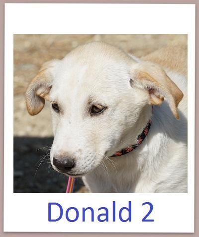 Donald2 prof
