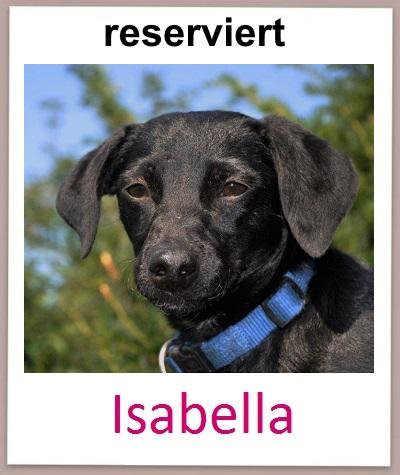 Isabella res neu