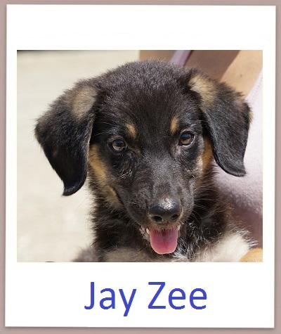 Jay Zee prof