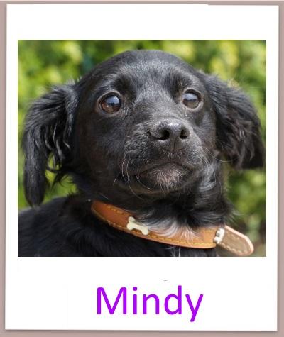 Mindy prof
