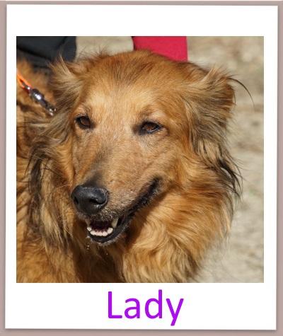 lady prof