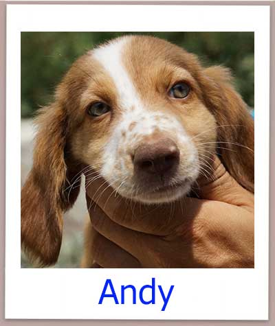 Andy prof