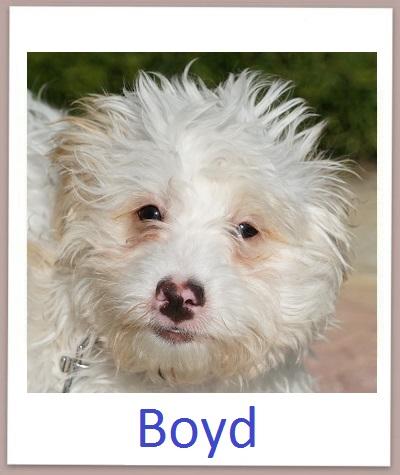 Boyd prof