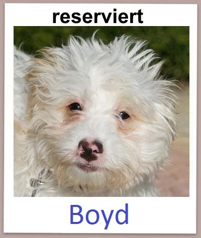 Boyd res