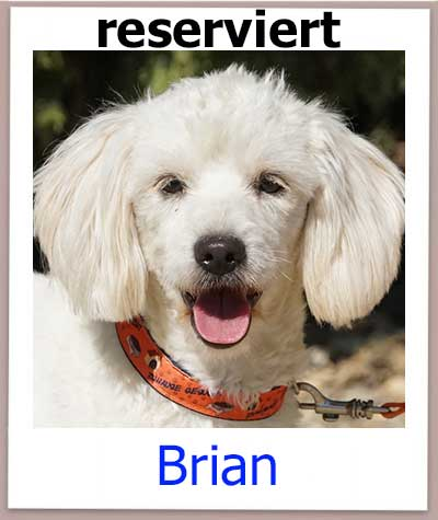 Brian res