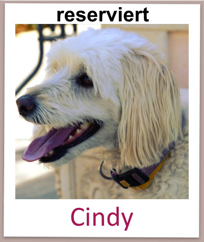 Cindy prof res