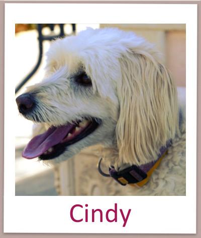 Cindy prof