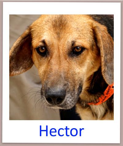 Hector prof