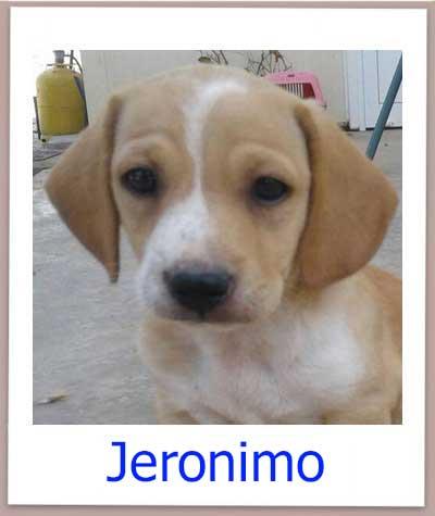 Jeronimo prof