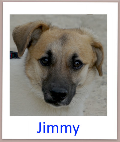 Jimmy prof