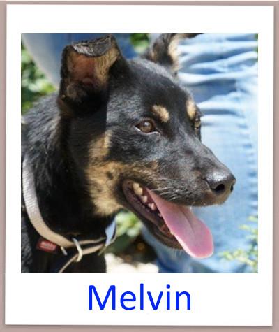 Melvin prof