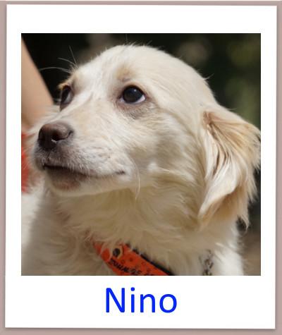 Nino prof