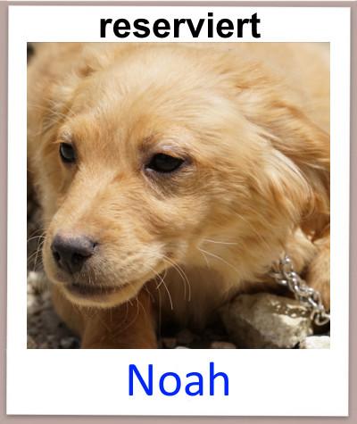Noah prof res