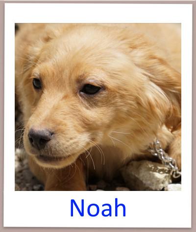 Noah prof