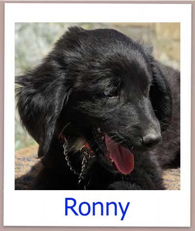 Ronny prof