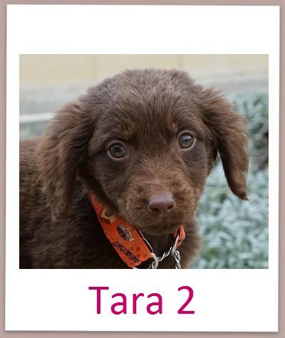 Tara2 prof