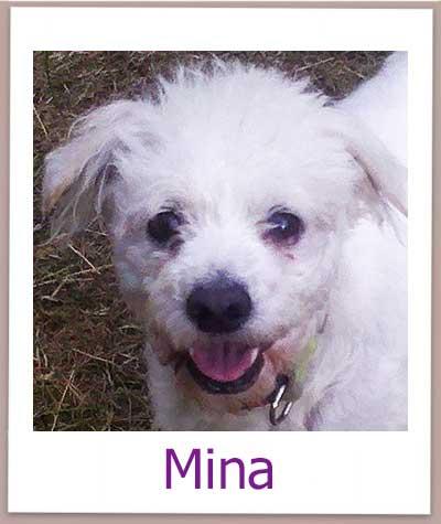 Notfellchen Mina sucht eine Familie.