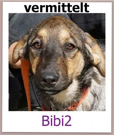 Bibi2 Tierschutz Zypern Hund vermittelt 1