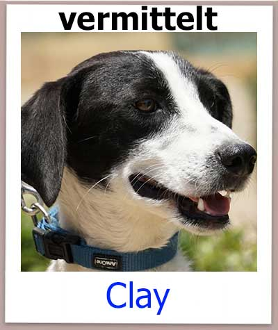 Clay Tierschutz Zypern Hund vermittelt