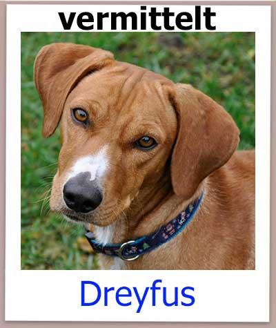Dreyfus Tierschutz Zypern Hund vermittelt 1