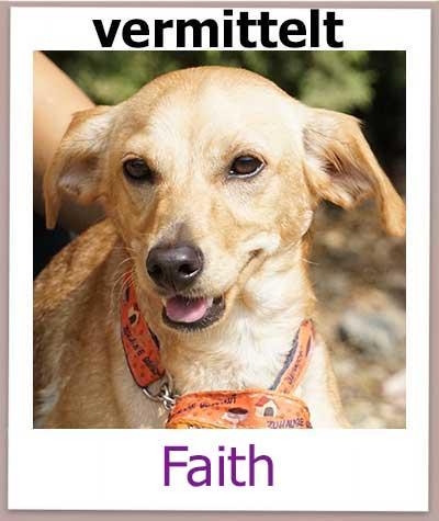 Faith Tierschutz Zypern Hund vermittelt 1