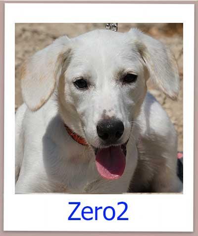 Welpe aus dem Tierheim Zypern sucht ein Zuhause.