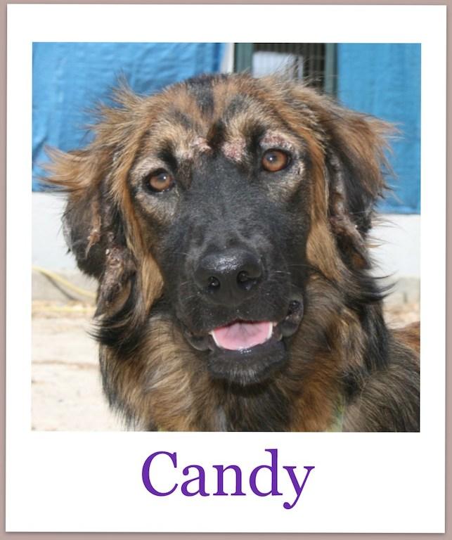 CandyPro
