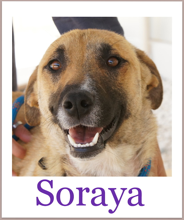 SorayaPro