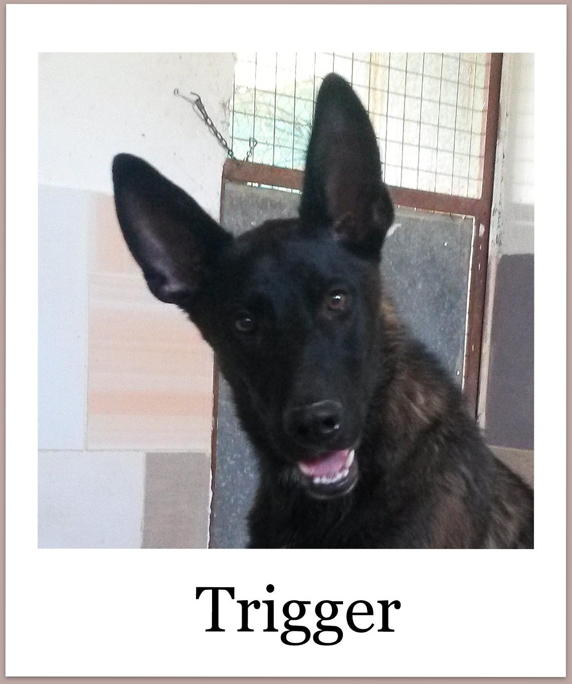 TriggerProneu