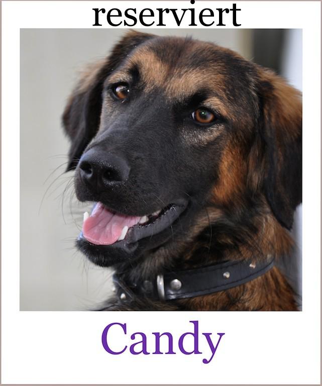 candyProneu reserviert