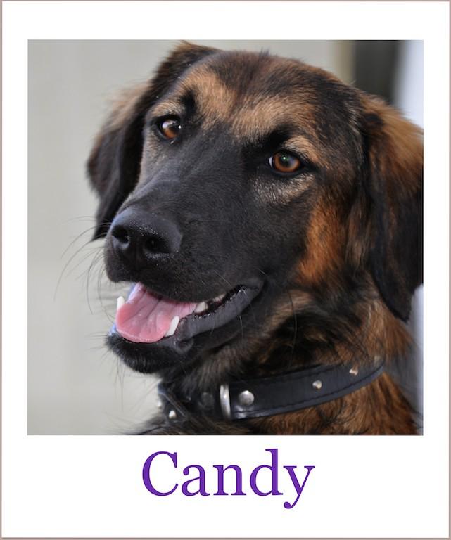 candyProneu