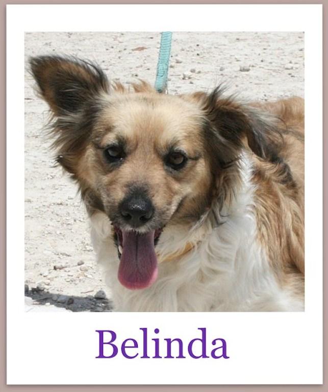 BelindaPro