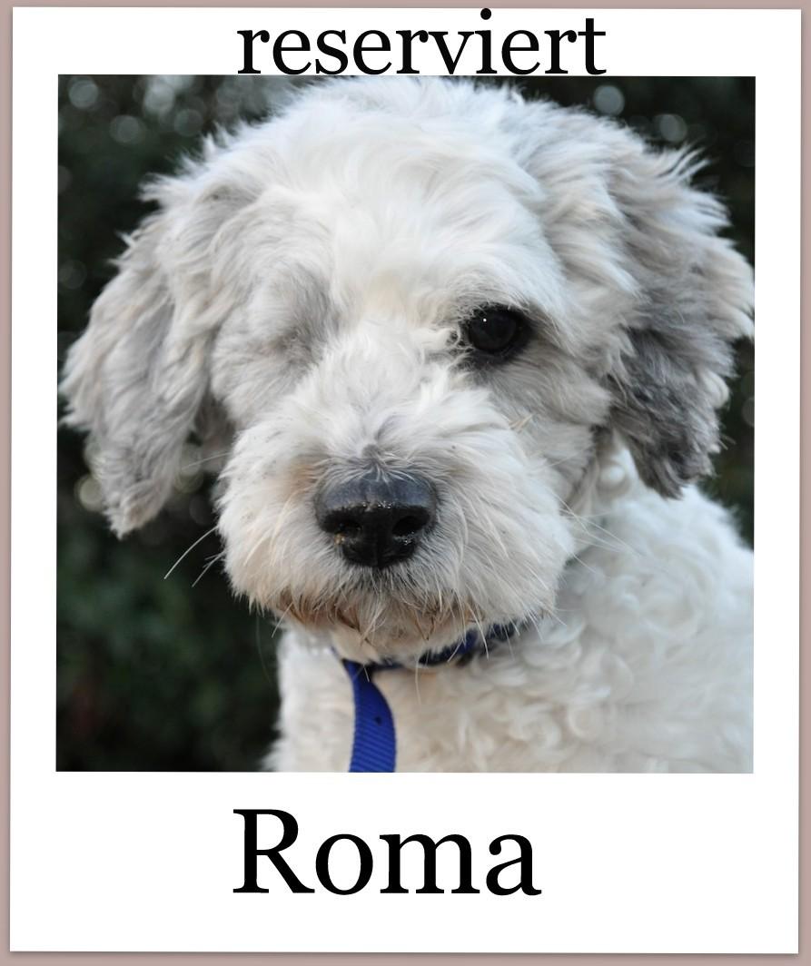 RomaProneu-reserviert