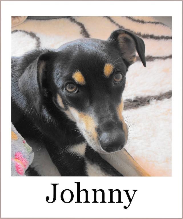 JohnnyProneu