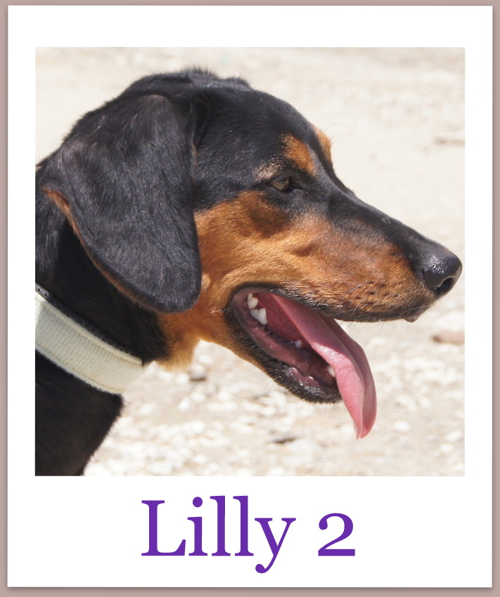 Lilly2Pro