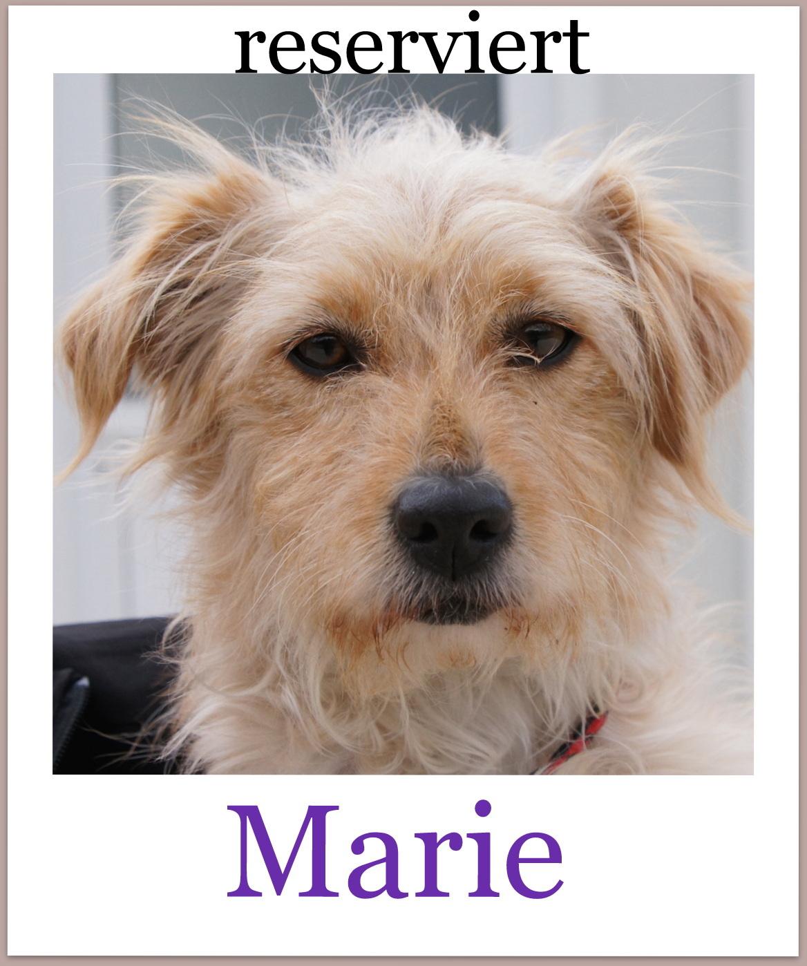 Marie-Pro-reserviert