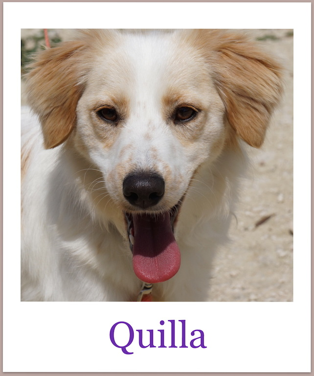 QuillaPro