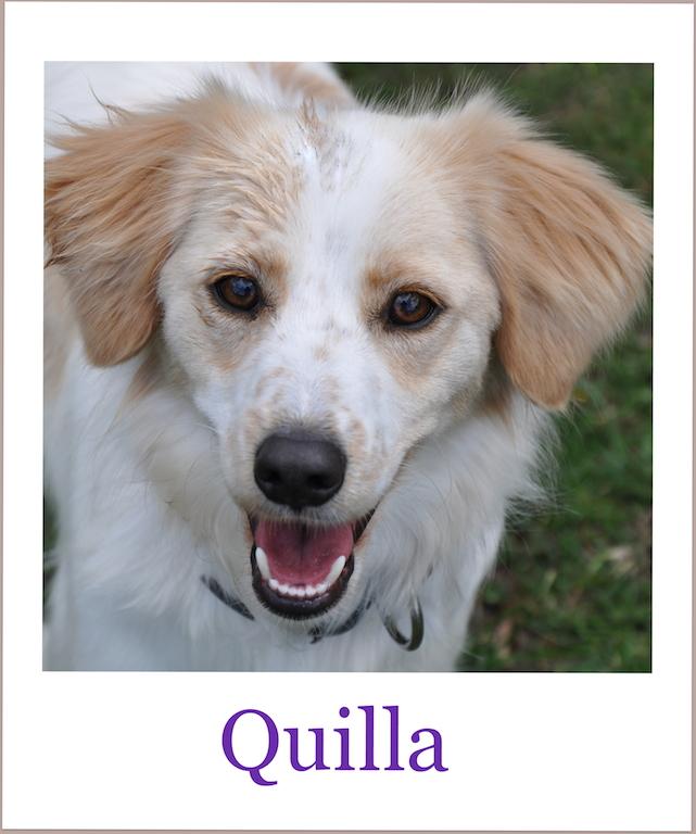 QuillaProneu