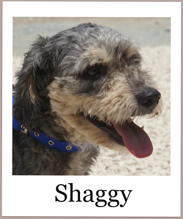 ShaggyPro